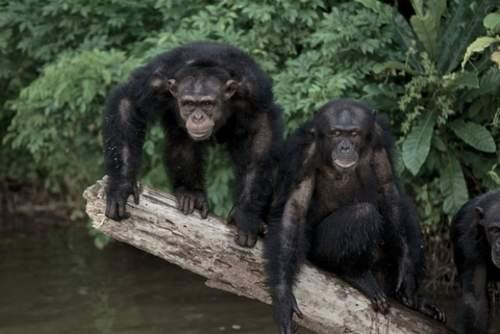 Esta es la auténtica Isla de los simios